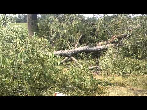 These trees fell during one of the storms in the summer of 2012. I shot this video at Cottage City Park in Maryland.