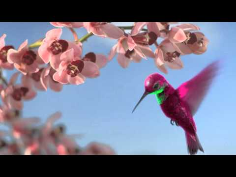 abc2 hummingbird ident
