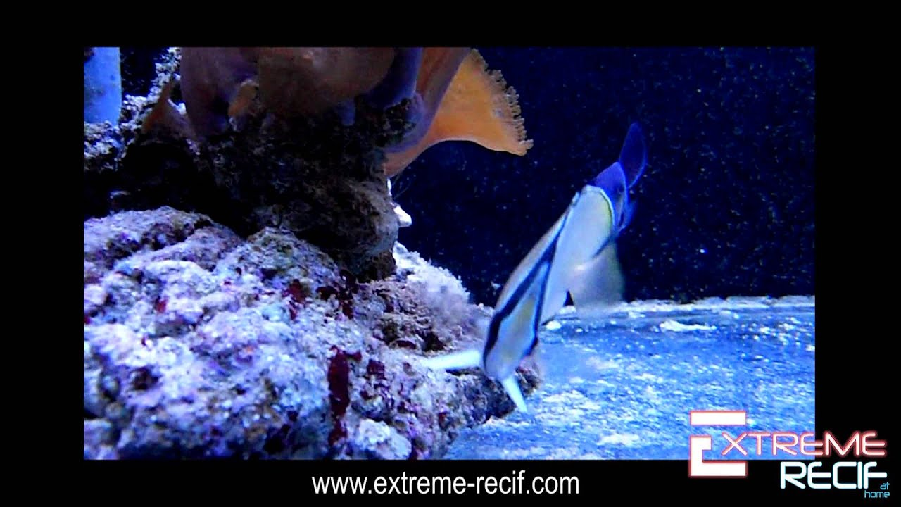 Magasin extreme recif aquariophilie besan on youtube for Vpc aquariophilie