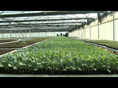 Syrian Refugee Crisis in Lebanese Farmlands