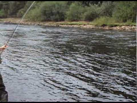 16lb salmon on fly - spey casting in the UK