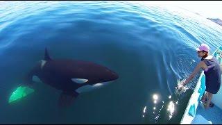Unique Orca encounter in the Sea of Cortez...Bahia de los Angeles, Mexico.