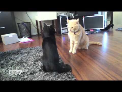 Управление драки кошек :D