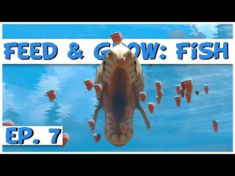 Feed and Grow: Fish - Ep. 7 - River Bonrex! - Feed and Grow: Fish Gameplay