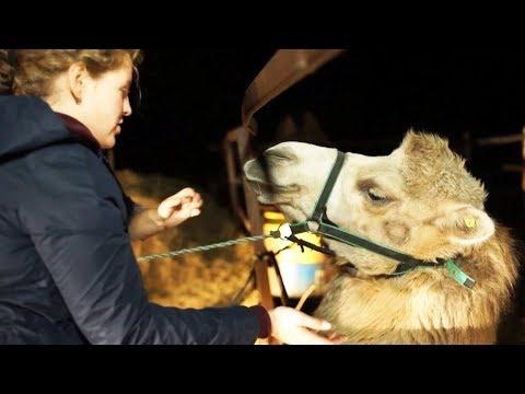 Украли лошадей — заработаем на верблюдах | ЧЕЛОВЕК НА КАРТЕ