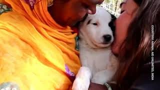 Indian animal rescue organization saves dying puppy
