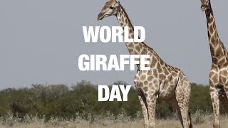 Celebrate With These Gentle Giants