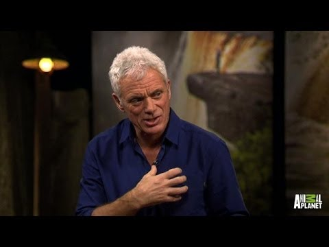 Fish Eating Fish Tattoo Jeremy Wade on Eating Fish