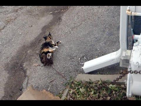 PHOTOS: Nebraska Humane Society rescues cat from leg trap