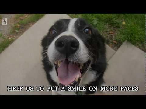 Border Collie Rescue - Smile