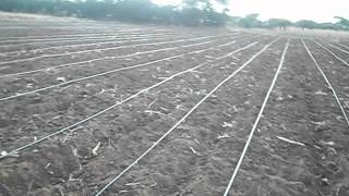 How Drip irrigation works. (Drip irrigation for sustainable water use in Agriculture).