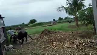 Desi xxx video