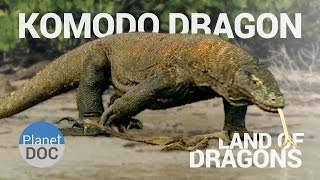 Komodo Dragon. Land of Dragons | Nature - Planet Doc Full Documentaries