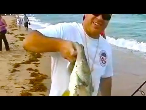 Awesome Beach Snook Fishing