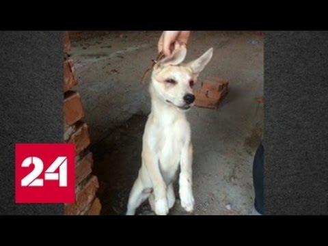 Расправы над животными в Хабаровске стали поводом для возбуждения дела