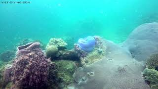 14 November 2018 Scuba diving in the South of Phu Quoc