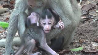 Wildilfe home,update Good morning,three little monkeys They are really nice