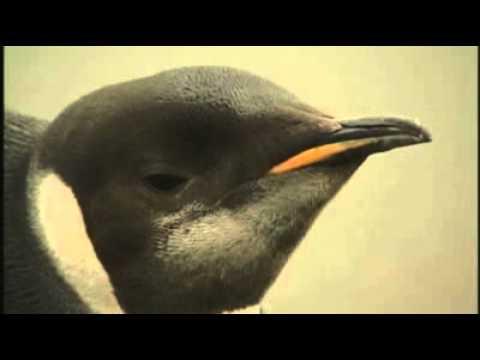 Antarctic penguin finds it happy feet in NZ