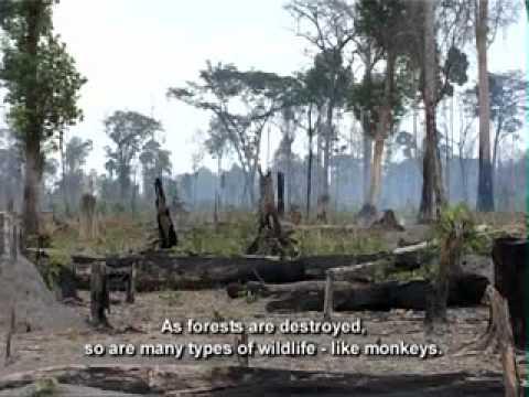 Primates: No monkey business!