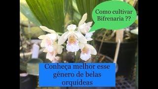 CONHEÇA A ORQUÍDEA BIFRENARIA, E MANEIRAS DE CULTIVAR MELHOR ESSE GÊNERO !