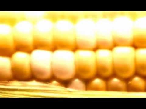 Peru Bans GMOs, USA Doesn't! TheMediaSpeaks