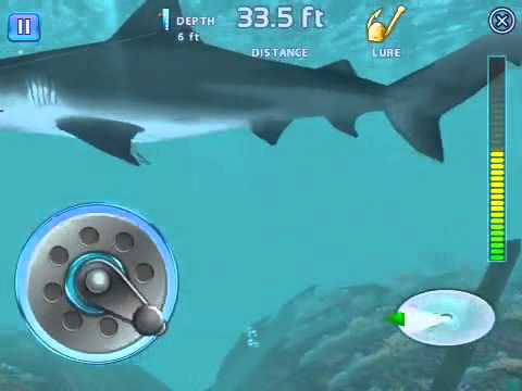 Fishing kings how to catch a shark
