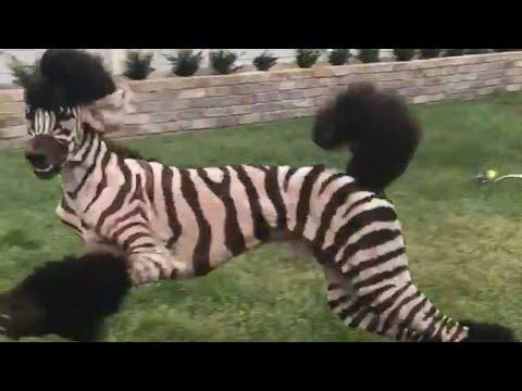 Funny Pet Fails: Lock The Doggy Door! (August 2017) || FailArmy