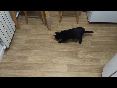 Купил лазер для кота 8 месяцев