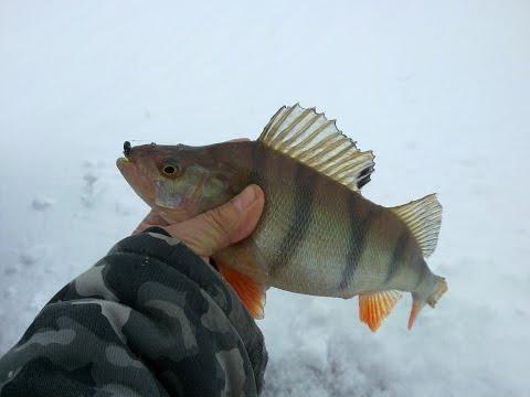 рыболов поймал 15 окуней ершей в 3 раза меньше чем окуней