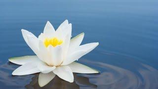 Meditatie, Zenmuziek, Chakra, Ontspannende Muziek voor Stress Verlichting, Relaxen, ☯2557