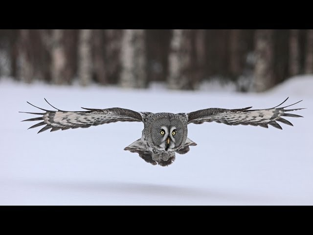 "Frozen Planet Trailer - ""A World Beyond Imagination"" - BBC One"
