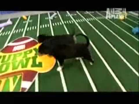 Puppy Bowl Iv [Puppy Bowl]