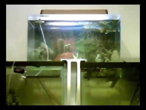 Connect two fish tanks alternative fill method diy for Fish tank ice method