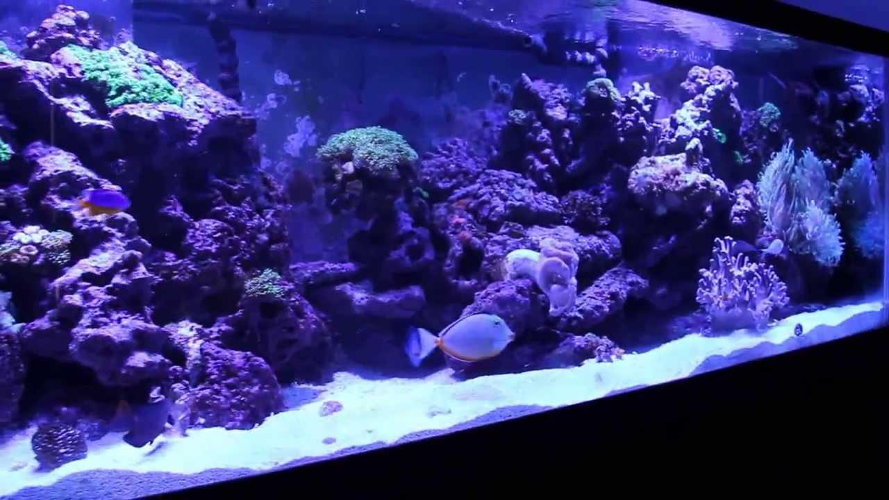 Saltwater Aquarium 180 Gal Reef Tank Youtube