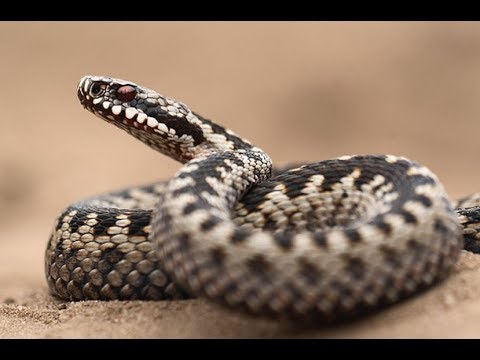 Змеи как сделать чтобы они не укусили