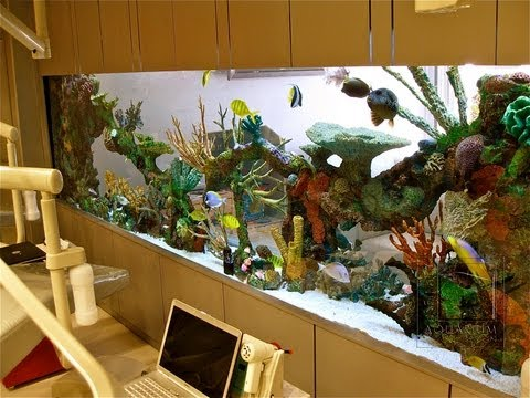 Custom Aquariums And Saltwater Fish Los Angeles Youtube