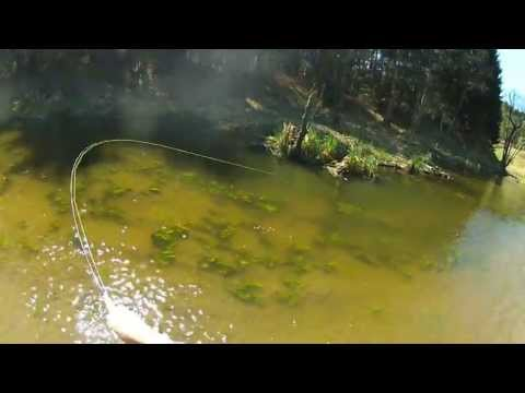 Fly Fishing in Poland for European Chub