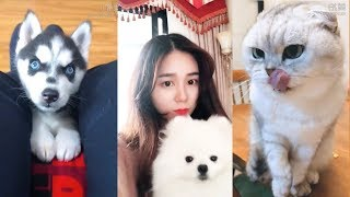 Cute Dogs and Cats | Funny Cats and Dogs Videos Compilation #13 | Cute Is Not Enough