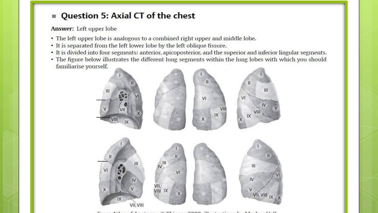 Segmental lung anatomy
