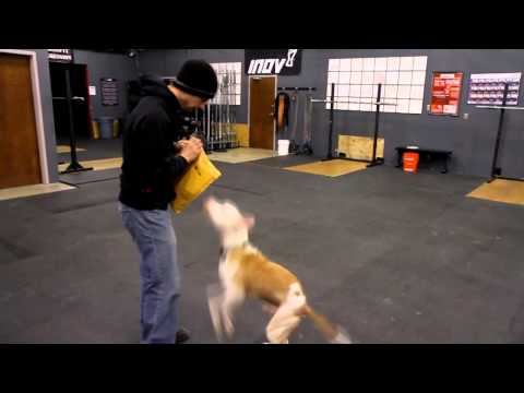 Wallace the Pit Bull Plays Fetch with Mark Buehrle