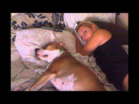 Top 10 Reasons You Can't Trust Pit Bulls