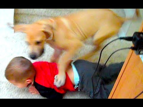 PUPPY TACKLE!!!
