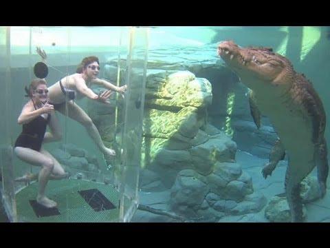 Osos, cocodrilos, tiburones: así es el turismo con animales