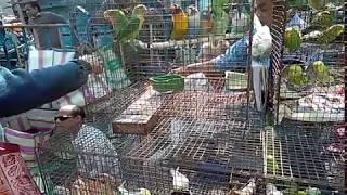 Galif street birds market.