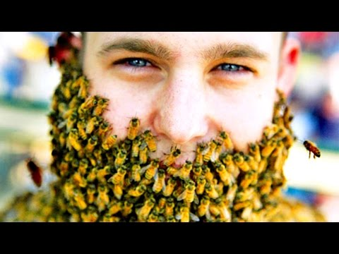 BEE BEARDS NEED TO STOP, INTERNET - SourceFed