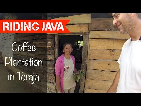 New Coffee Plantation in Toraja | Traveling with Mark #17