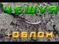 В поисках золота Чешуя Наконечник Серебряная монета с дыркой царские монеты Коп 2016 mp3