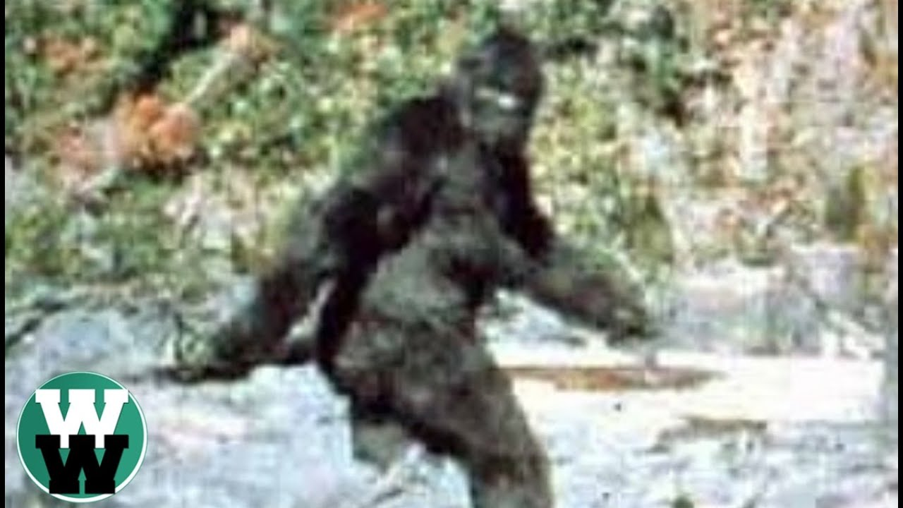 Bigfoot Project Investments, Inc. Stock Symbol BGFT Best photo of bigfoot