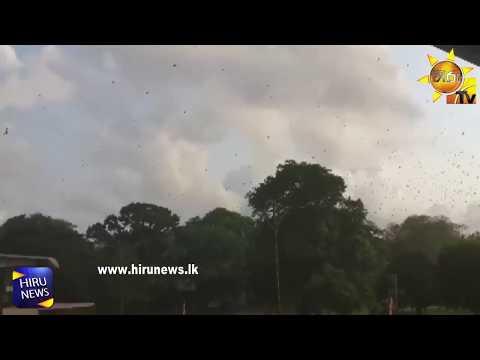 colombo bats|eng