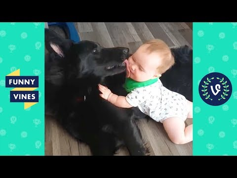 TRY NOT TO LAUGH - Funniest Animals & Cute Pets Compilation | Funny Vines July 2018